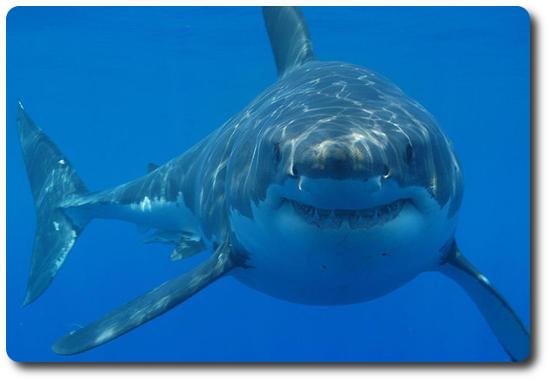 Learn About All The Different Types Of Sharks Here  Shark