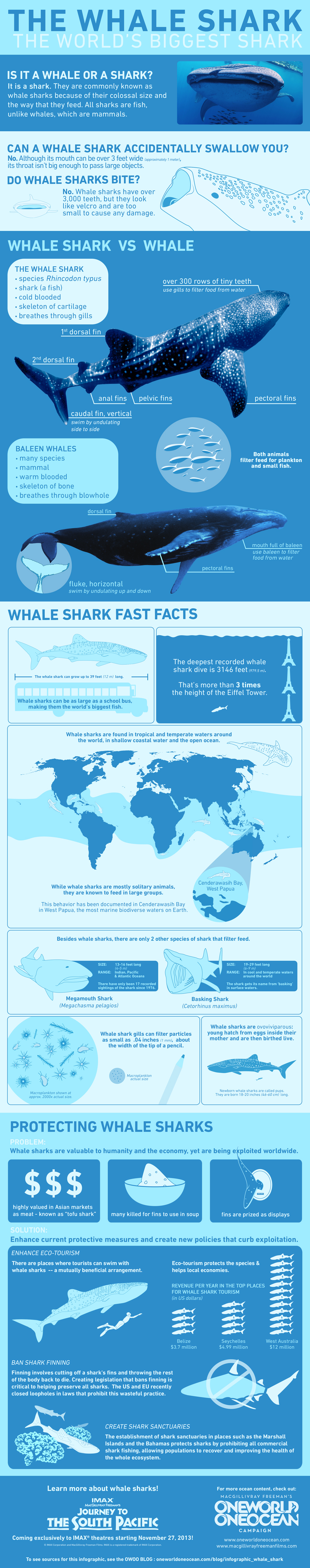 Whale Shark Infographic 2