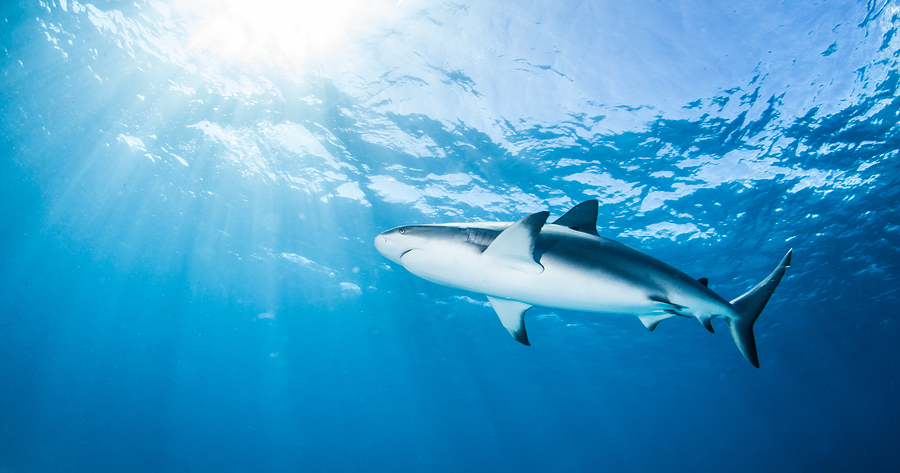 50 Amazing Shark Facts
